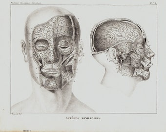 1834 Antique head ANATOMY print, maxillary arteries