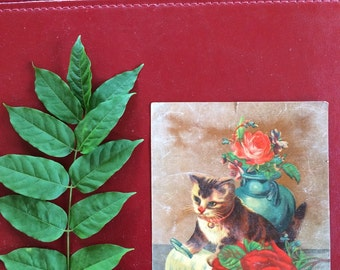 Victorian Chromo Lithograph Print - Cat and Red Roses  - Paper Ephemera - Trade Card