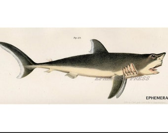 SHARK attack of the great white  a delightfully toothie nature print