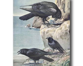 "Raven Art, Crow Art (1930s Bird Illustration, Vintage Bird Print ) --- ""Eastern Crow & Northern Raven"" No. 59"