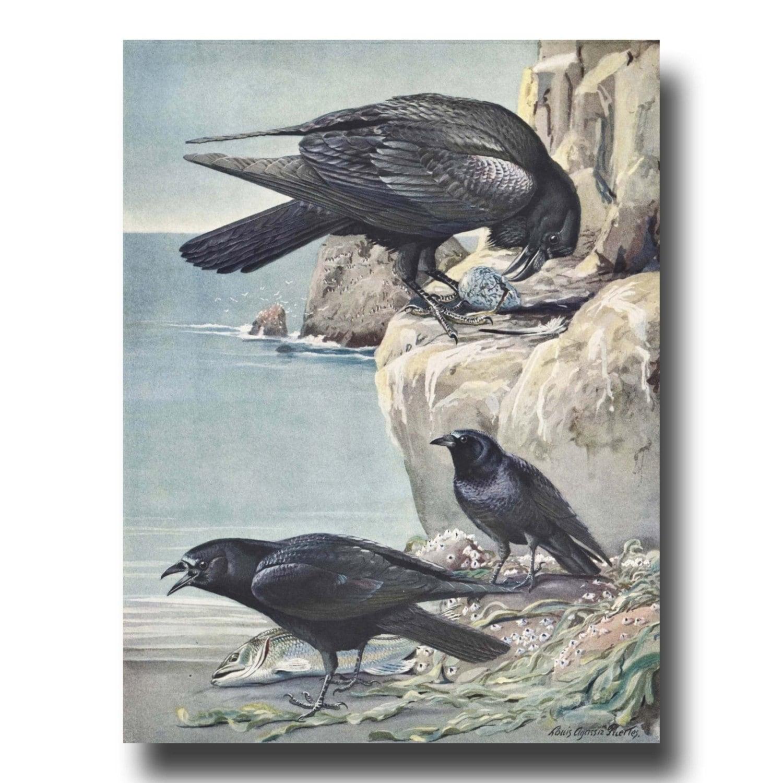 Raven Art Crow Art 1930s Bird Illustration Vintage Bird