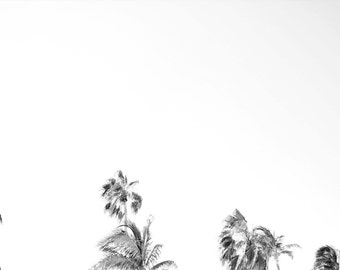 Cancun Palms: Black and White Palm Tree Mexico Photography
