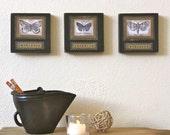 Butterfly Moth original art Black Gold decoupage on Wood Blocks