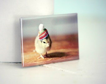 Chicks in Hats Rigid Rectangle Refrigerator Magnet Chicken Rainbow Pom Pom Hat