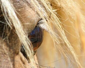 Chocolate Horse Eye Photo, western home decor, mini horse photography, abstract equine art, horse lover gift, Eye Dream