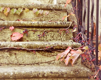 Autumn Vines and Stairs, France Photography, Autumn, Travel Photography, Art Print, Wall Decor