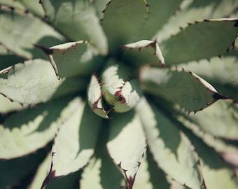 Agave - Photographic Print -  desert, native, southwest, american, arizona, cactus, green, wild, wanderlust, travel, cacti