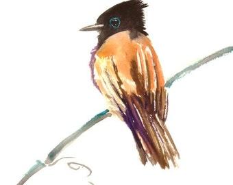 Paradise Flycatcher, bird art, original watercolor painting, 12 x 9 in, brown black minimalist wall art