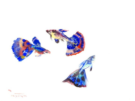 guppy fish aquarium art original watercolor 12 x 9 in. Black Bedroom Furniture Sets. Home Design Ideas