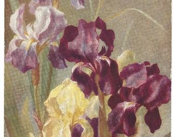 Antique Postcard - Raphael Tuck and Sons-  Oilette - Iris -  9505