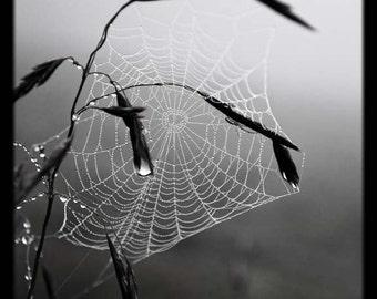 Spiderweb Black White Photo Print, Spider Web Photographic Print, Black And White Wall Print, Black And White Spider Web Photo Print