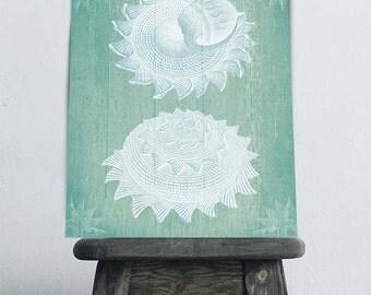 Seashell print - Two White Shells on Turquoise, Sea shell art print sea shell print seashell art print Nautical Decor Turquoise wall art