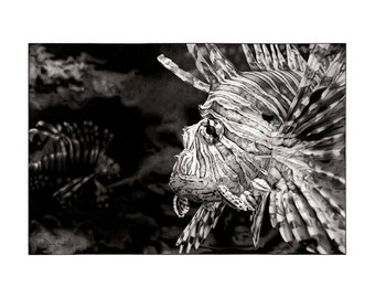 """Lionfish - Stares and Stripes 20x28"""""""