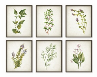 Herb Print Set of 6, Garden Herbs, Herb Watercolor Painting, Kitchen Herb Decor, Cooking, Basil, Oregano, Thyme, Rosemary, Dill, Sage, AB24