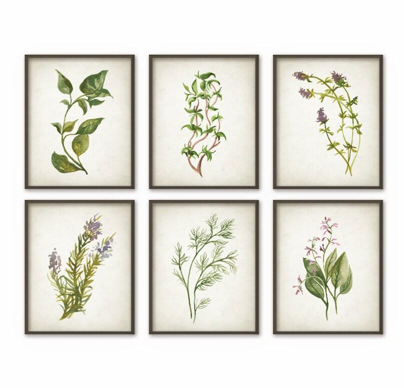 Herbs Kitchen Wall Art Poster Set Of 6 Basil Oregano Thyme