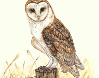 Barn Owl in Watercolor *Original* Painting
