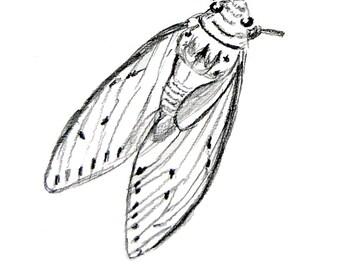 LCM Bug 1 by Angela Diplock (Fine Art Print)