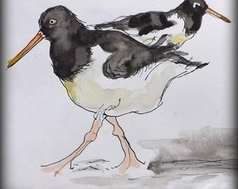 OyOy-stercatchers  - Original Watercolour