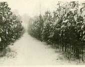 "Vintage Photo ""Path to Spring"" Landscape Winter Snow Snapshot Photo Antique Photo Black & White Photograph Found Photo Paper Ephemera - 193"