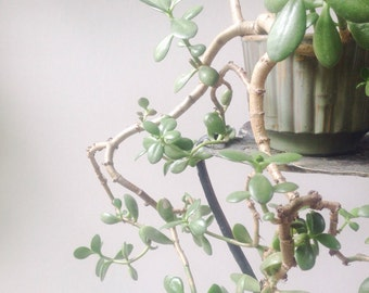 Vintage Bamboo Relief Planter