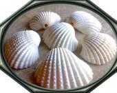 Large Scallop Sea Shells, Jewelry Beads, Sea Shells Bulk, Scallop Shell, Wholesale Natural Seashells For Jewelry Making, Seashell Beads