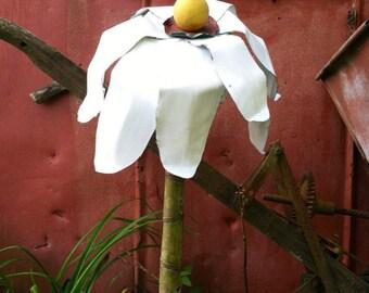 Echinacea tin garden flower
