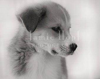 Adorable Mixed-Breed Puppy - Fine Art Photography Print