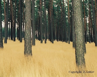 Landscape Photo, Pine Forest, Germany, Print, Forest