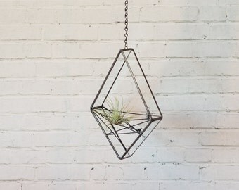 Hanging Air Plant Diamond