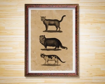 Cats print Animal poster Home decor