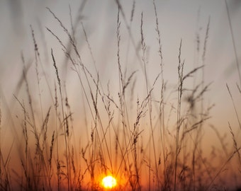 Grass at Sunset - Nature Photography, Nature, Wall Art, Home Decor, Colourful Silhouette, Sun, Orange - Limited edition Fine Art Print