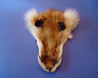 Red Fox Face Fur