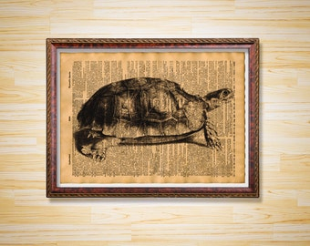 Turtle print Animal poster Antique dictionary print