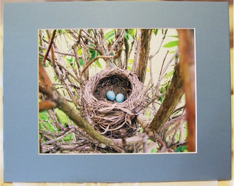 "Robin's Nest Photo - Robin's Eggs Photo - Bird Eggs in Nest Photo - 8 x 10 Matted Photo - ""New Life"""