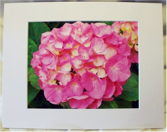 """Pink Hydrangea Photo - Pink Flower Photo - 8 x 10 Matted Photo - """"In The Pink"""""""