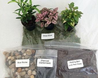 Terrarium/Fairy Garden Kit with 3 Plants - Create Your Own Living Terrarium (FREE SHIPPING)