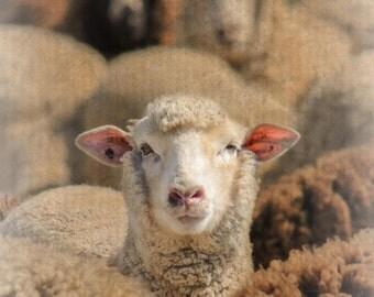 Sheep Art, Sheep Nursery, Sheep Wall Decor, Nursery Sheep, Children Room, Children Room Decor, Home Wall Art,  Home Wall Decor, Print