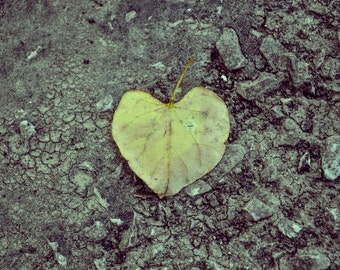 Instant Download Photography Heart Leaf