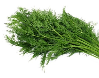 Heirloom Dill seeds, Organic Dill seeds, non-GMO Dill seeds, home grown Dill seeds, 100 seeds
