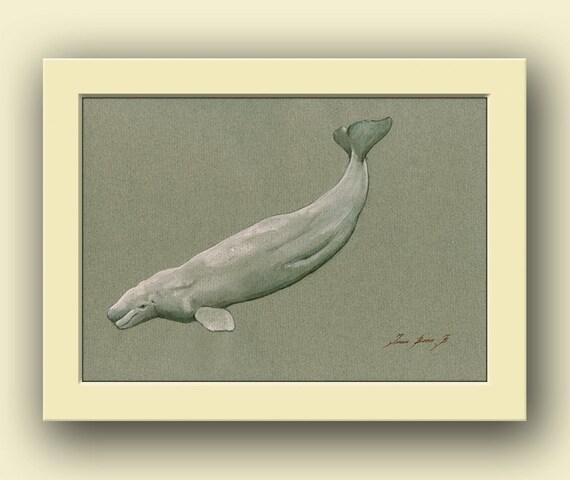 White Whale Wall Decor : Beluga whale animal white wildlife decor
