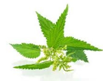 Urtica dioica - dried organic nettle herb