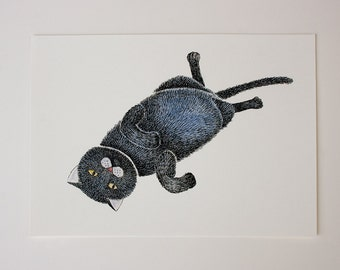 Print of a lazy cat