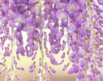 Hanging Purple Lilacs Photo 8 x 10