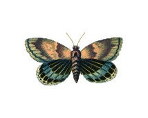 Set of 2 Vintage Antique Butterfly Temporary Tattoo
