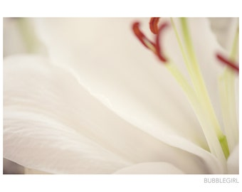Nature Photography PRINT, White Lily - 2, Wall Art