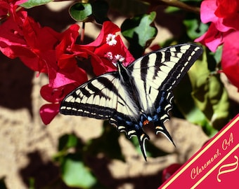 Greeting Card - Swalllowtail Butterfly