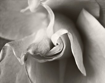 Sepia rose digital photographic print home décor modern décor abstract brown white flower photography nature photography.