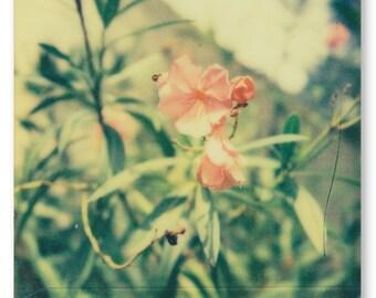 Rose, Polaroid 12 x 16 inch print on Kodak Pro Endura paper