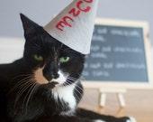 Dunce Kitty Cat Hat