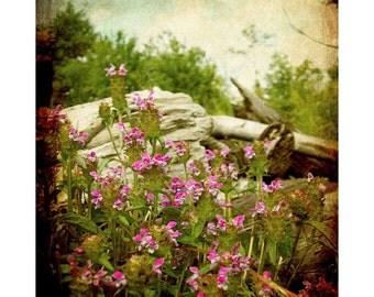 Homestead Field Flowers, no. 2 - Vintage Art Prints - Fairfield Maine - nostalgic photo art